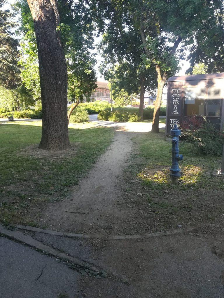 field road in the lawn