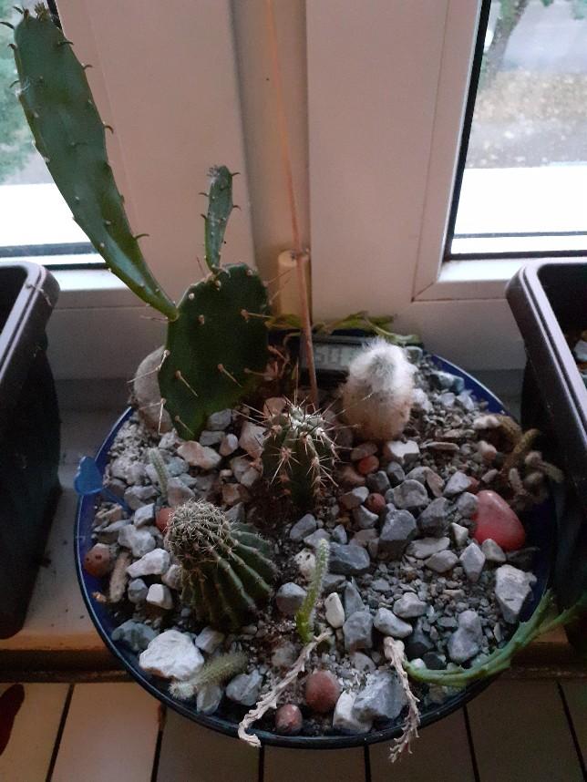 cactus bowl room