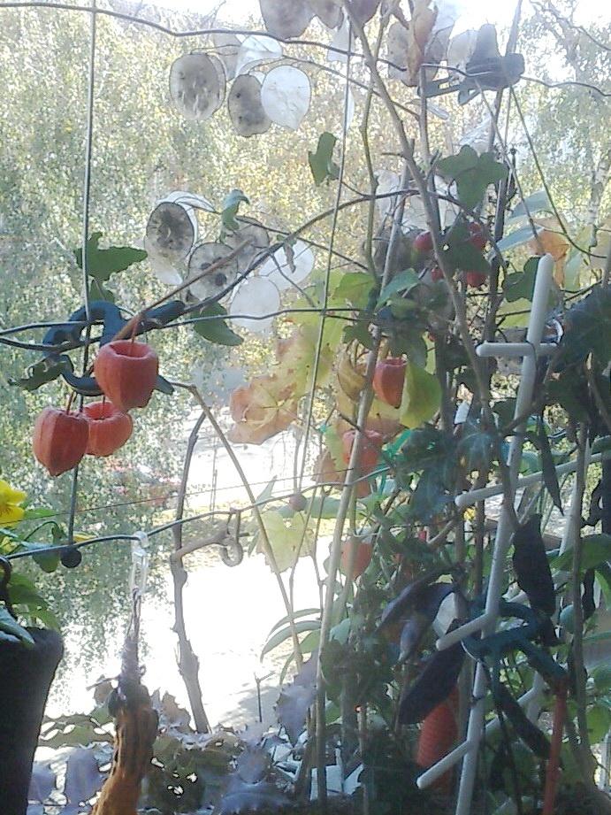 colorful plants wire net loggia