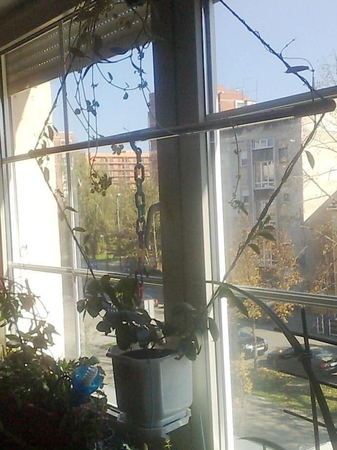 plant rope window