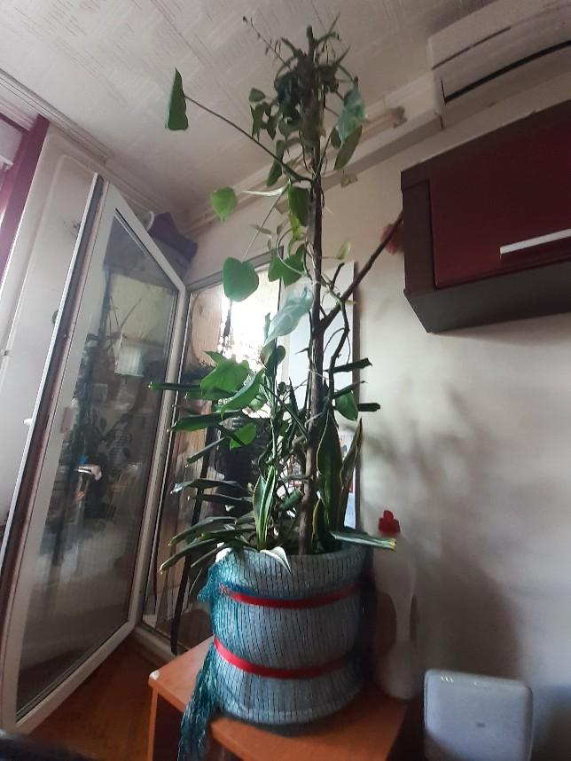 plants creeper branch1