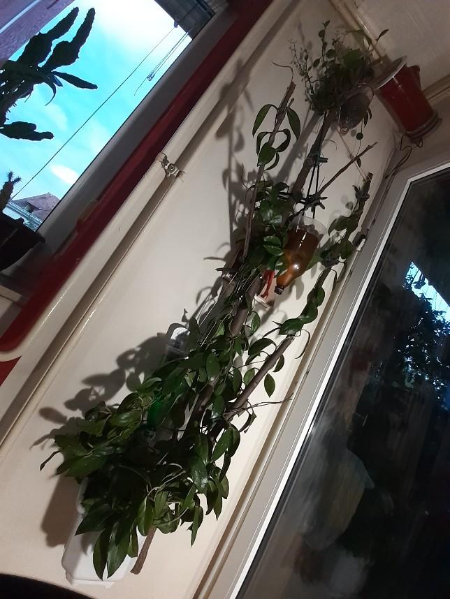 plants creeper branch2
