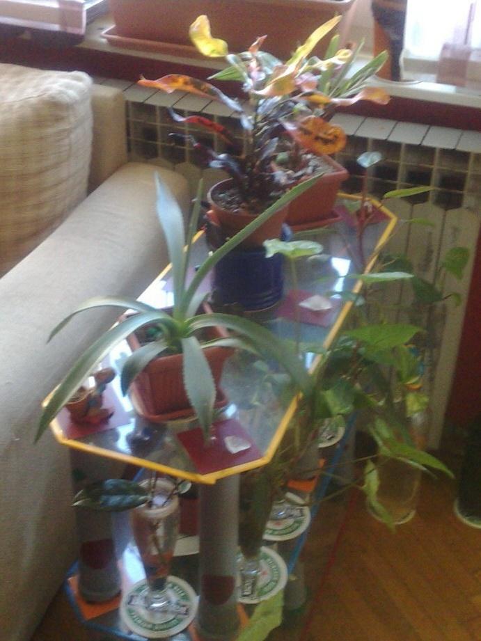 plants glass table