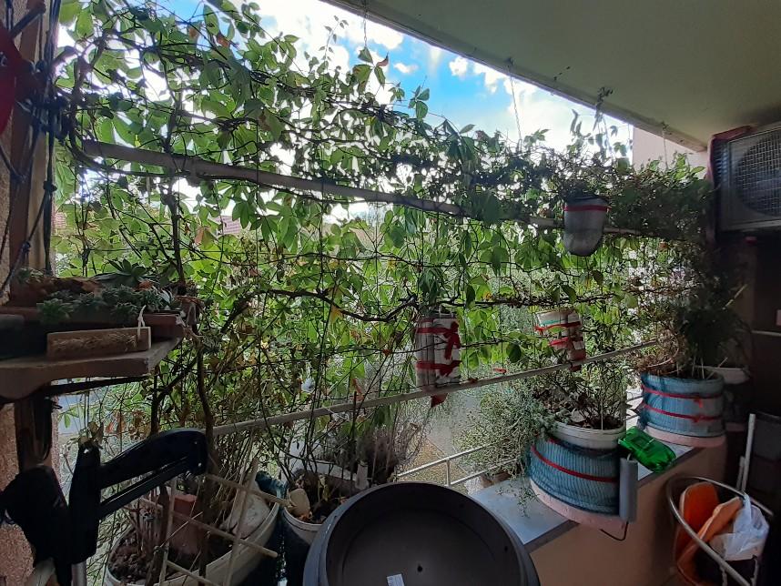 plants loggia day