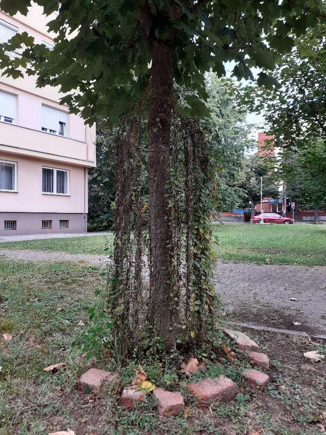 plants network tree