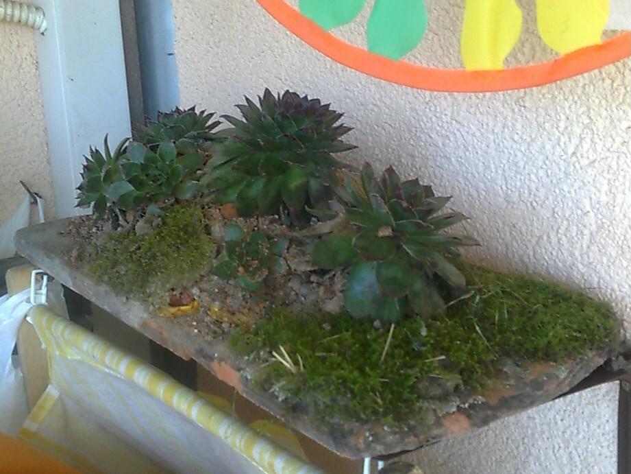 tile plants