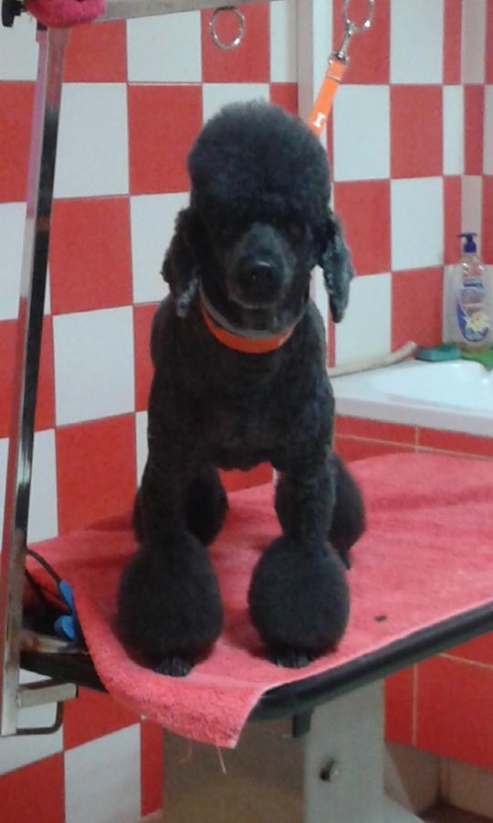 Bigi pets grooming