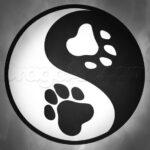 Pets-like-Jing-Jang