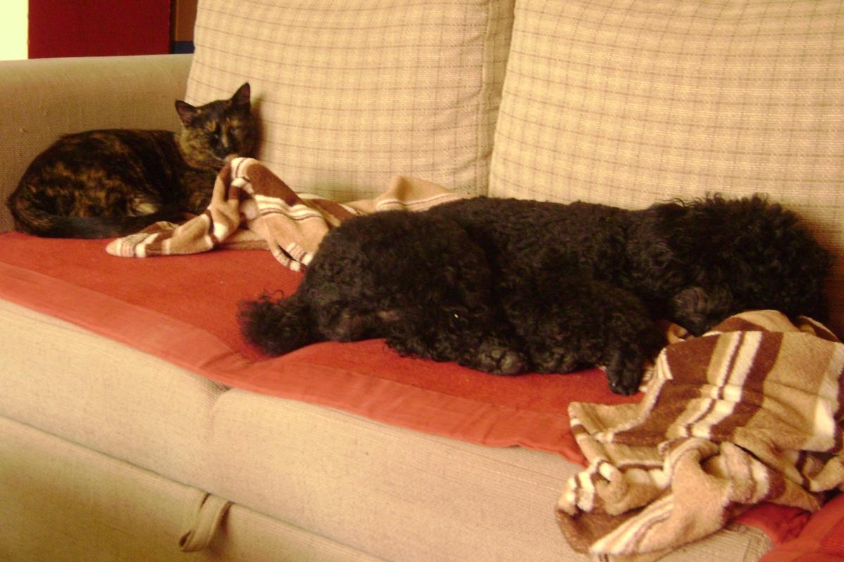 cat Murphy dog Adi