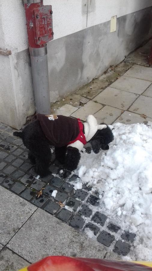 dog Adi winter