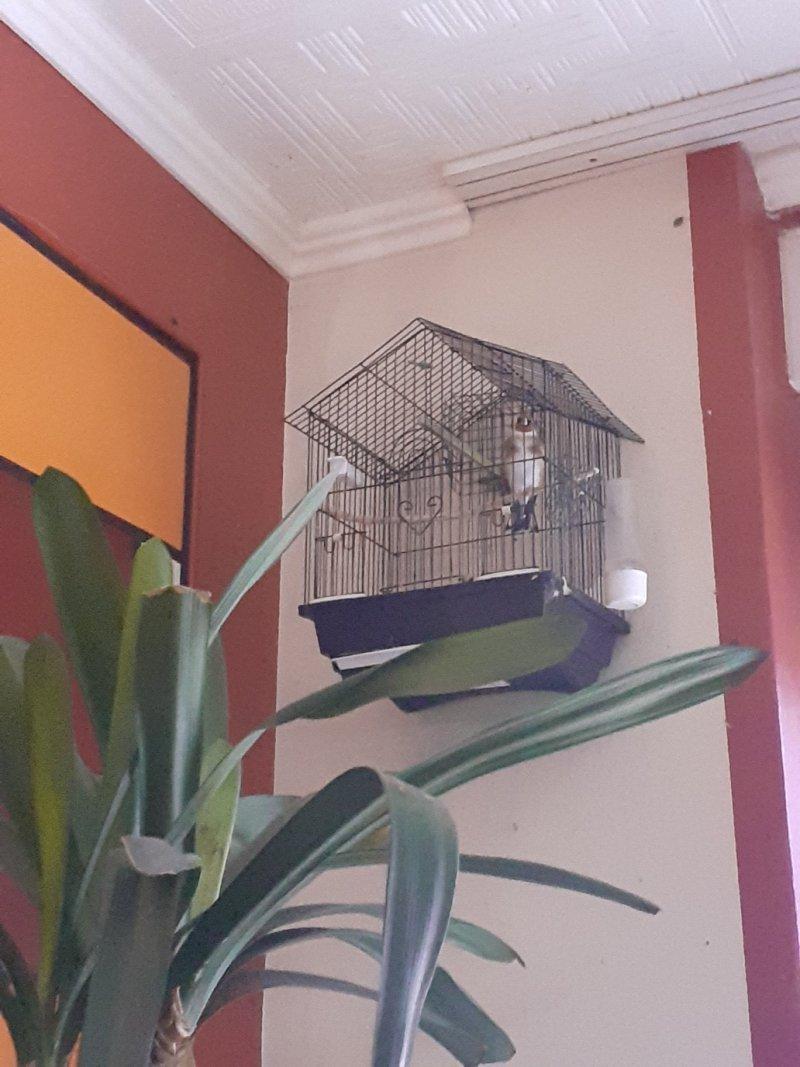my bird